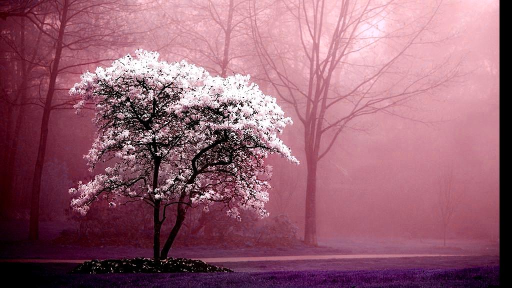 Деревья и кол-во бревен с них. Способы добычи.