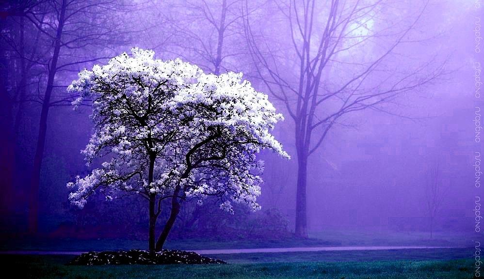 Время роста деревьев по климатическим зонам. Время созревания плодов.